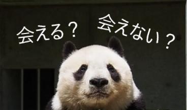 王子 動物園 パンダ 抽選