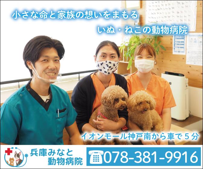 兵庫みなと動物病院