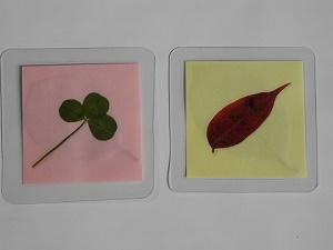 野草で栞づくりと植物標本