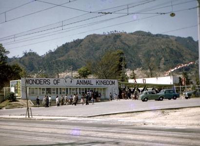 王子動物園 開園当時
